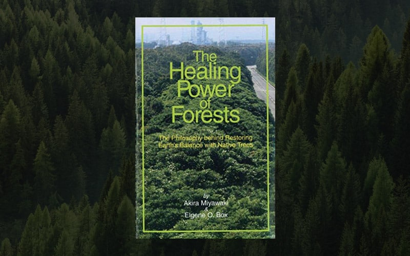 The Healing Power of Forests: Restoring Earth's Balance with Native Trees