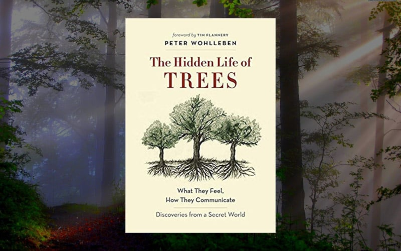 """""""The Hidden Life of Trees"""" and other books by Peter Wohlleben"""
