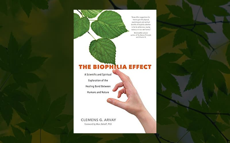 The Biophilia Effect: A Exploration of the Healing Bond Between Humans and Nature